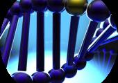 DNA round