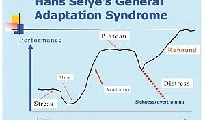 Selye Adaptation principle